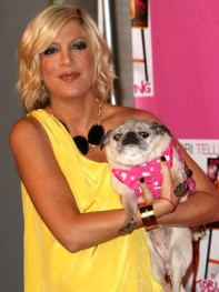 file_28_8401_celebs-who-look-like-their-dogs-tori-spelling-08