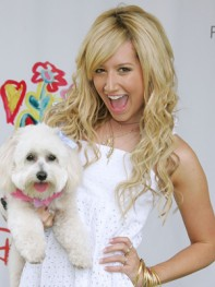 file_29_8401_celebs-who-look-like-their-dogs-ashley-tisdale-09